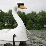 """Ukradł łódkę i utknął na środku jeziora. Mówił, że """"łabędzie go nie osądzają"""""""