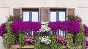 Ukwiecone balkony i ogrody dla każdego