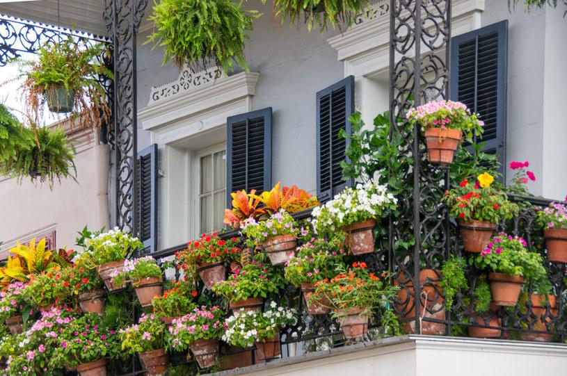 Ukwiecony balkon /©123RF/PICSEL