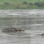 Ulewne deszcze nawiedziły Śląsk. Alarmy i pogotowia w 7 powiatach
