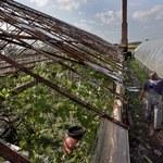 Ulewy i gradobicia zniszczyły 16 tysięcy hektarów upraw na Opolszczyźnie