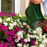 Ulga podatkowa na zieleń na balkonach i w ogródkach we Włoszech
