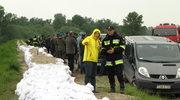 Umacanianie wałów przeciwpowodziowych koło Sandomierza