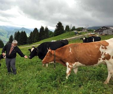 UOKiK: Polmlek stosował niekorzystne umowy dla dostawców mleka