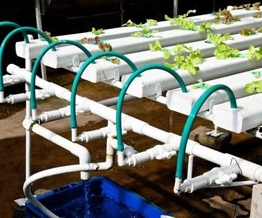 Uprawa hydroponiczna: Czym jest? Jakie rośliny się do tego nadają?