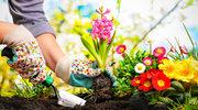 Uprawa ogródka świetnie działa na ciało i... głowę