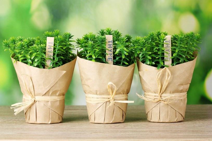 Uprawiając te zioła, masz zawsze pod ręką naturalne i tanie środki na problemy trawienne i oczyszczanie organizmu /123RF/PICSEL