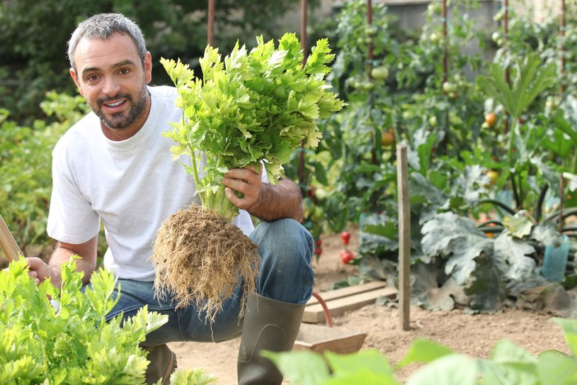 Uprawianie ogródka to skuteczna broń w walce z nadwagą /123RF/PICSEL