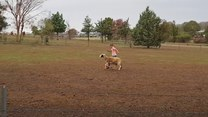 Uratowana owieczka znalazła nową przyjaciółkę