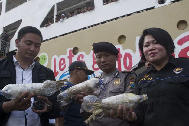 Uratowano ponad dwadzieścia papug /AFP