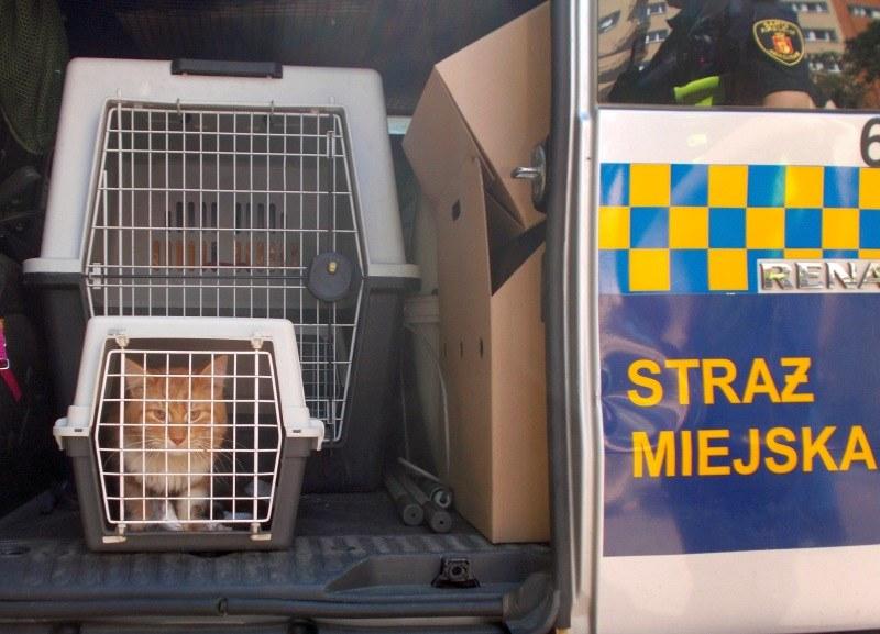 Uratowany kot; źródło: Stołeczna Straż Miejska /
