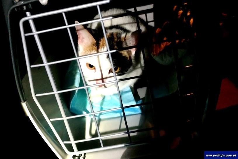 Uratowany kot /Policja