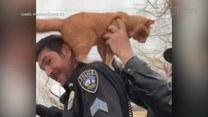 Uratowany! Policjant zniósł kota z drzewa… na plecach
