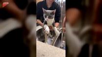 Uroczy kot w kąpieli. Zabawne, co robi