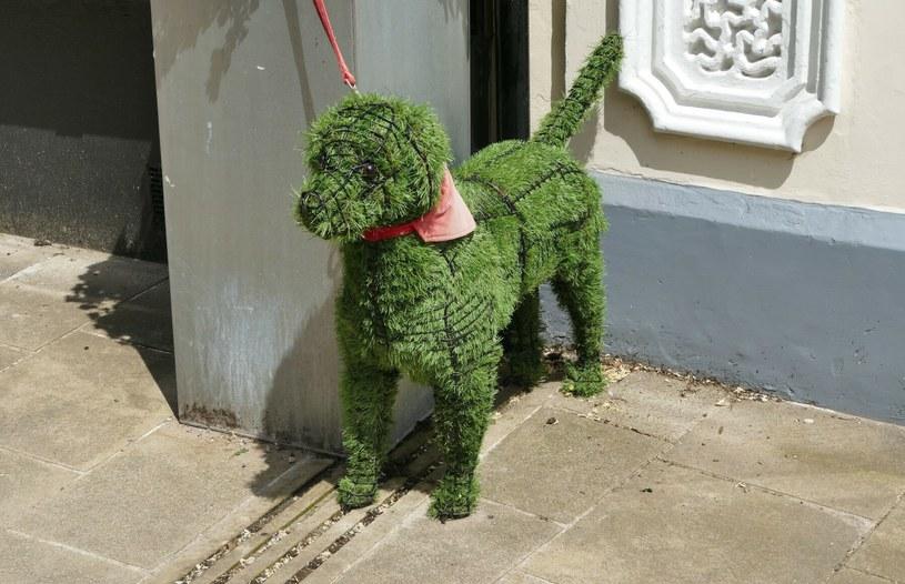 Uroczy pies-kwietnik pojawił się w małym miasteczku w hrabstwie Hampshire /Geoffrey Swaine/Shutterstock /East News