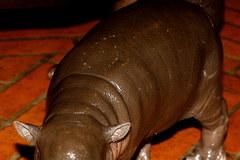 Urodził się hipopotam karłowaty