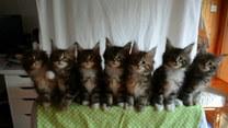Urzekające kotki pozują do wspólnego zdjęcia