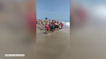 USA: Wędkarze złapali rekina młota