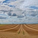 Ustawa o obrocie ziemią: Państwo nie da się wyprowadzić w pole