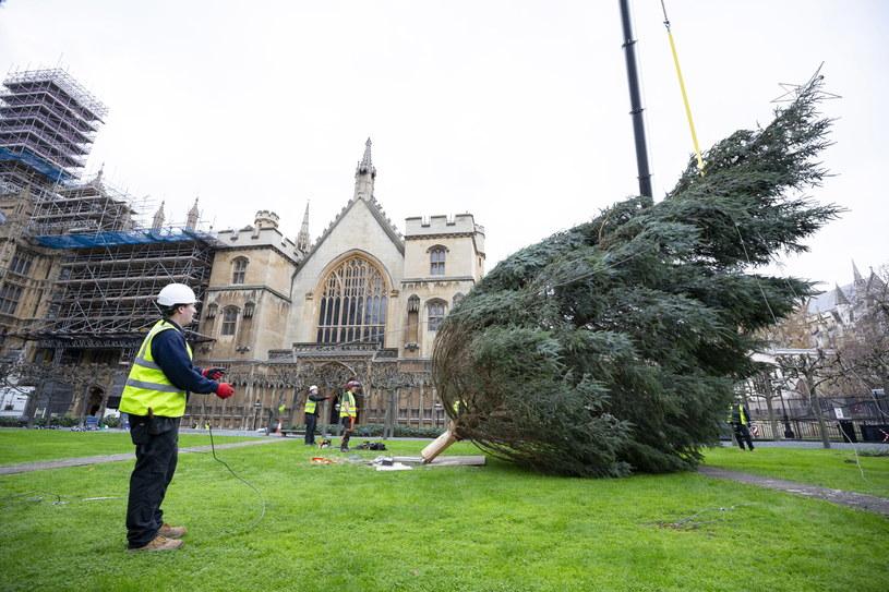 Ustawianie choinki przed budynkiem brytyjskiego parlamentu. /ROGER HARRIS / UK PARLIAMENT / HANDOUT /PAP/EPA