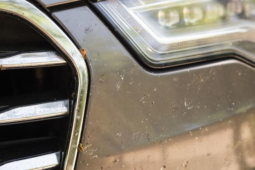 Usuń owady ze zderzaka /©123RF/PICSEL