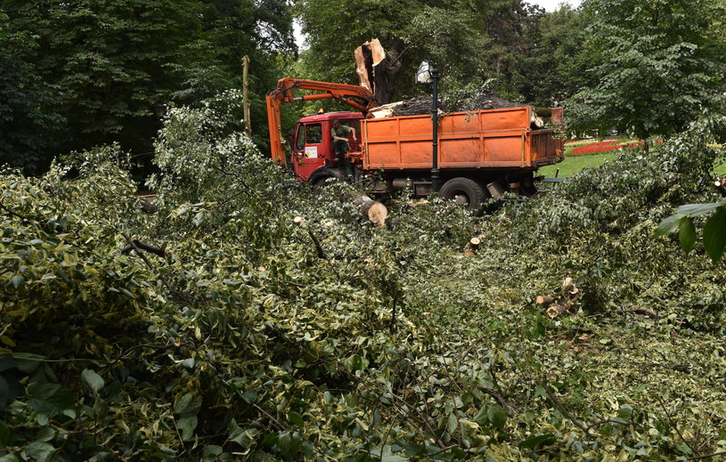 Usuwanie połamanych drzew /Jacek Bednarczyk /PAP