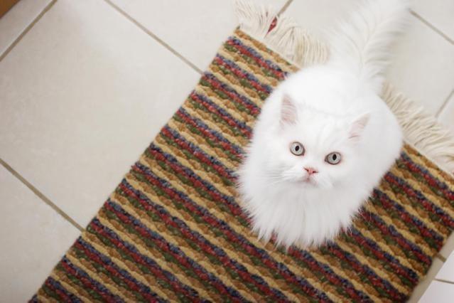usuwanie zapachu moczu kota /© Photogenica