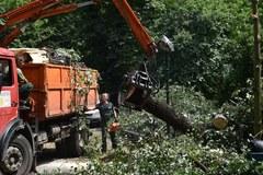 Usuwanie zniszczeń na Plantach w Krakowie