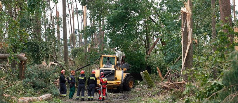 Usuwanie zniszczeń po nawałnicach w okolicy miejscowości Suszek /Adam Warżawa /PAP