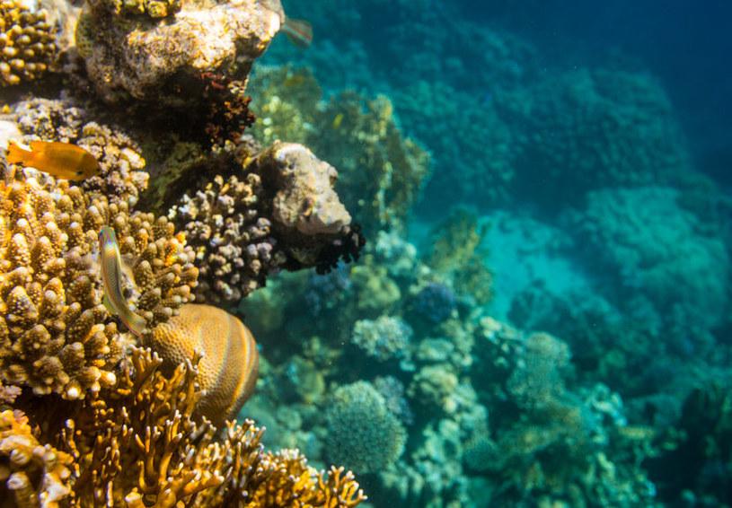 Utrzymanie raf koralowych w dobrym stanie jest w interesie nas wszystkich /123RF/PICSEL