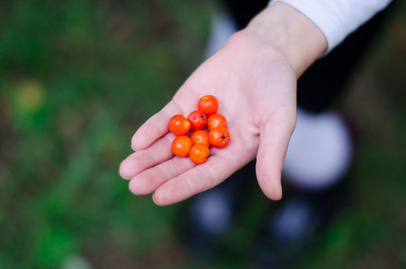 Uwaga! Można stosować wyłącznie przetworzone owoce (gotowane lub długo suszone) /123RF/PICSEL
