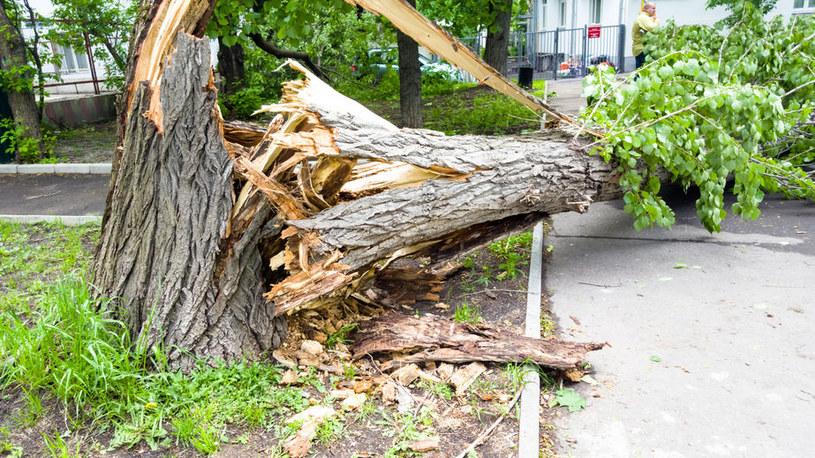 Uwaga na drzewa /©123RF/PICSEL