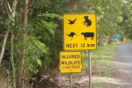 Uwaga na dzikie zwierzęta! /INTERIA.PL