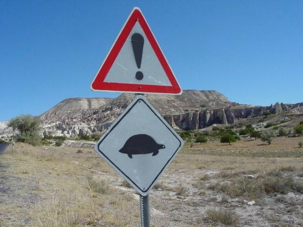 Uwaga na żółwie.