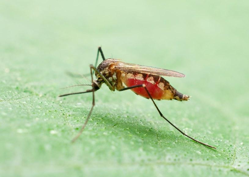Uważaj na komary /©123RF/PICSEL