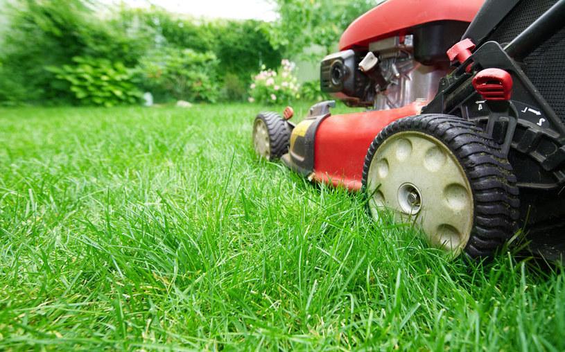 Uważaj przy koszeniu trawy /©123RF/PICSEL