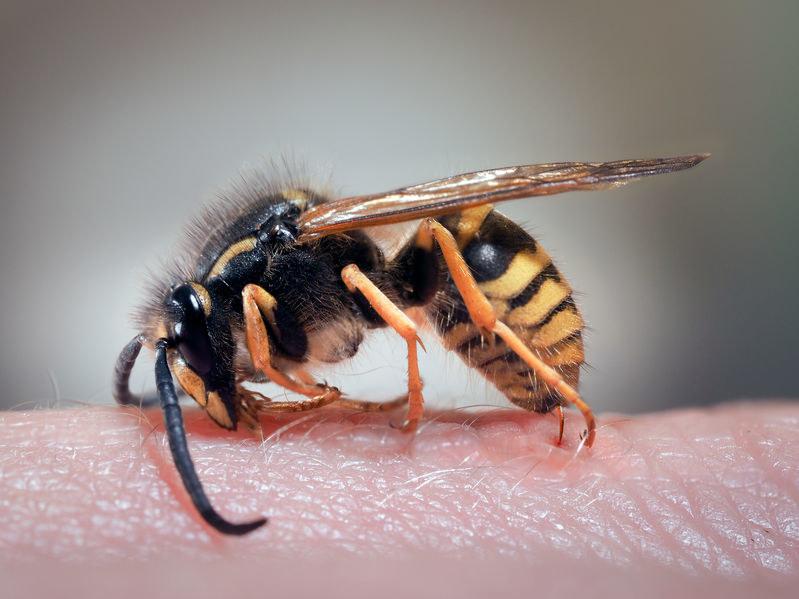 Użądlenie osy może wywołać reakcję alergiczną /123RF/PICSEL