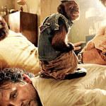 Uzależnili małpkę od... papierosów