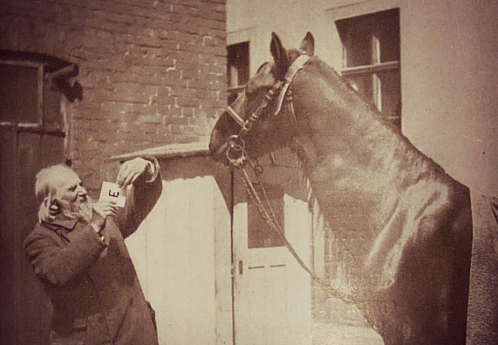 Van Osten okazał się oszustem, chociaż udowodnił, że zwierzęta są inteligentniejsze niż wydawało się to uczonym /materiały prasowe