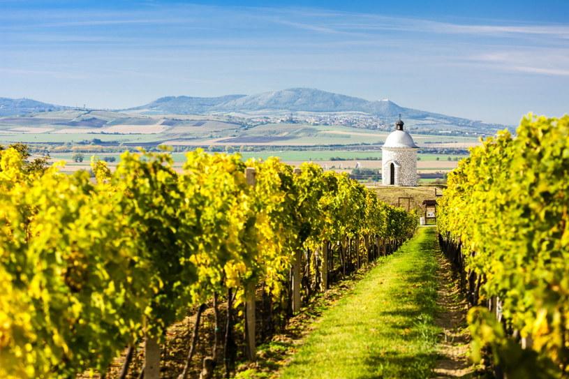 Velké Bílovice na pierwszy rzut oka można pomylić z włoskim krajobrazem /123RF/PICSEL