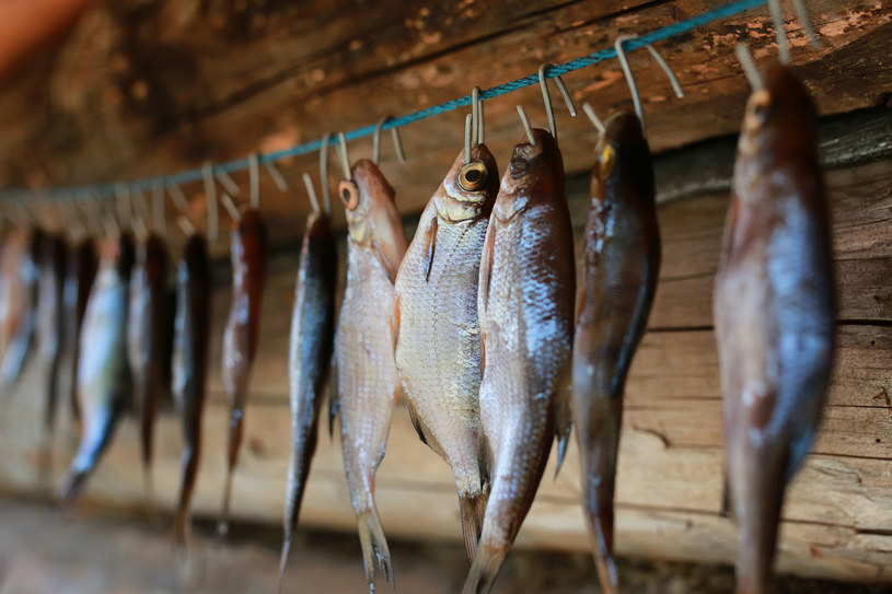 W 100 g mięsa tej ryby jest o połowę mniej kalorii niż w mięsie suma /123RF/PICSEL