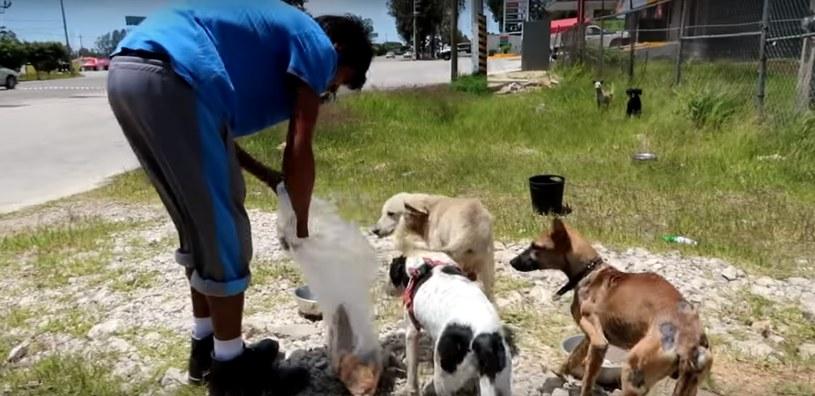 W 2013 postawił sobie jeden cel: pomóc tylu psom, ilu się da /YouTube