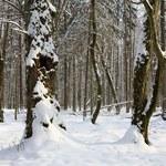 W 2016 r., w Nadleśnictwie Białowieża wycięto blisko 7,5 tys. drzew