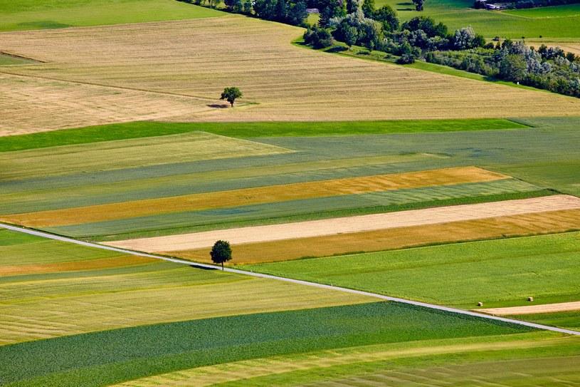 W 2021 roku będzie można kupić aż 5 hektarów ziemi rolnej? /©123RF/PICSEL