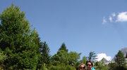 W alpejskim ogrodzie