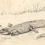 W Australii odkryto szczątki gigantycznego krokodyla
