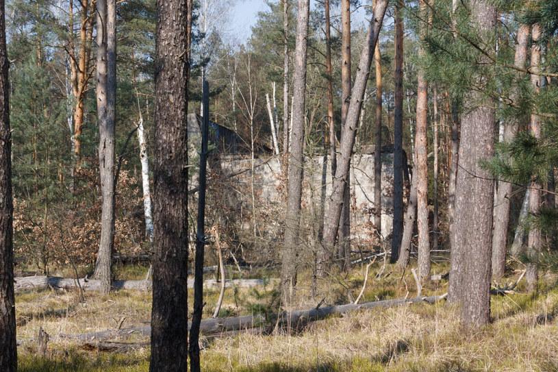 W całej Polsce w lasach ściółka jest bardzo sucha. /Marek Durajczyk /Reporter