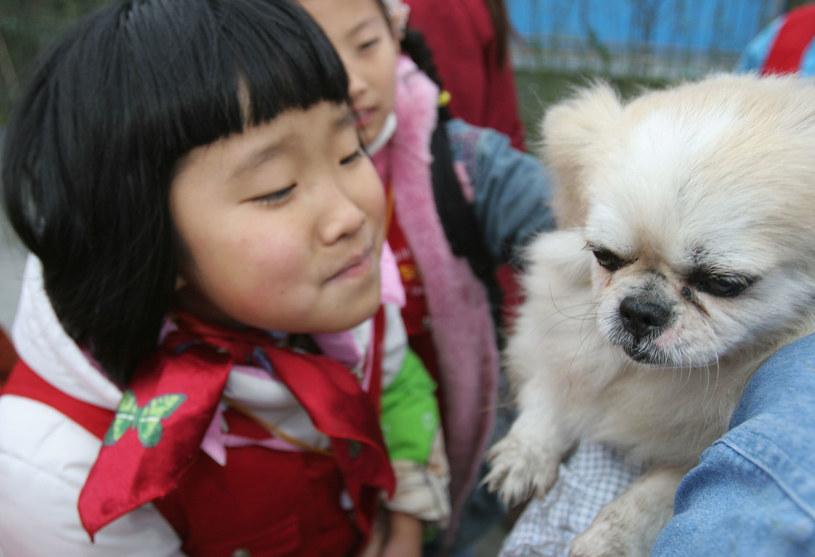W Chinach mięso psa jest warte 40-60 juanów /123RF/PICSEL
