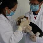 W Chinach możliwe będzie odtworzenie zmarłego psa. Pierwszy już się urodził