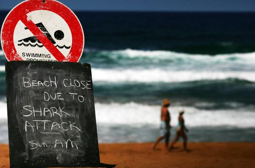 W ciągu roku rekiny zabijają ok 15 osób. To liczba bliska błędowi statystycznemu /AFP